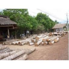 Cừ Dừa 5 - 6 m